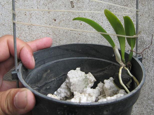 Kỹ thuật tách chiết Cattleya