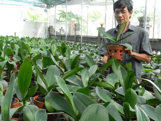 Kinh nghiệm chăm sóc hồ điệp nuôi cấy mô từ cây giống