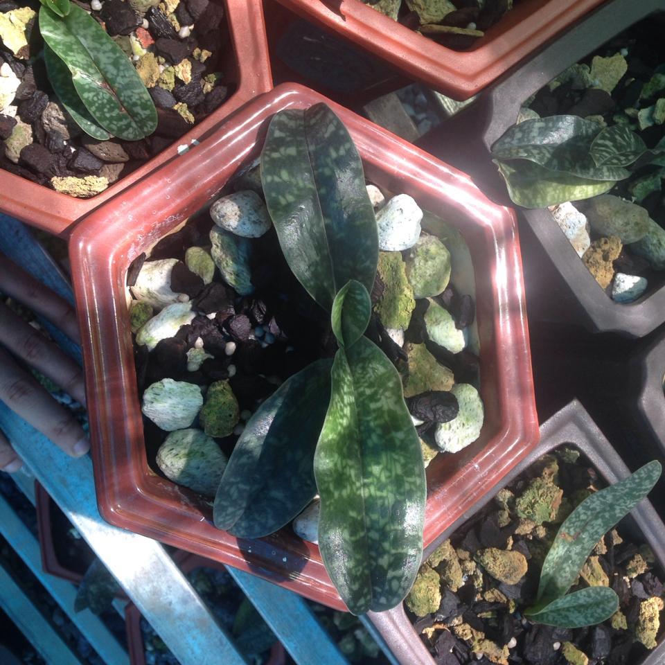 Kinh nghiệm trồng lan hài
