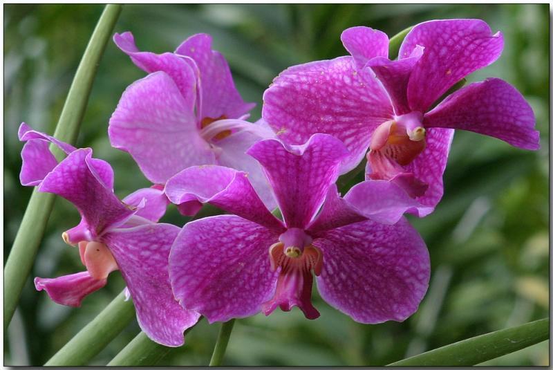 Một ít kinh nghiêm chăm sóc hoa lan vanda